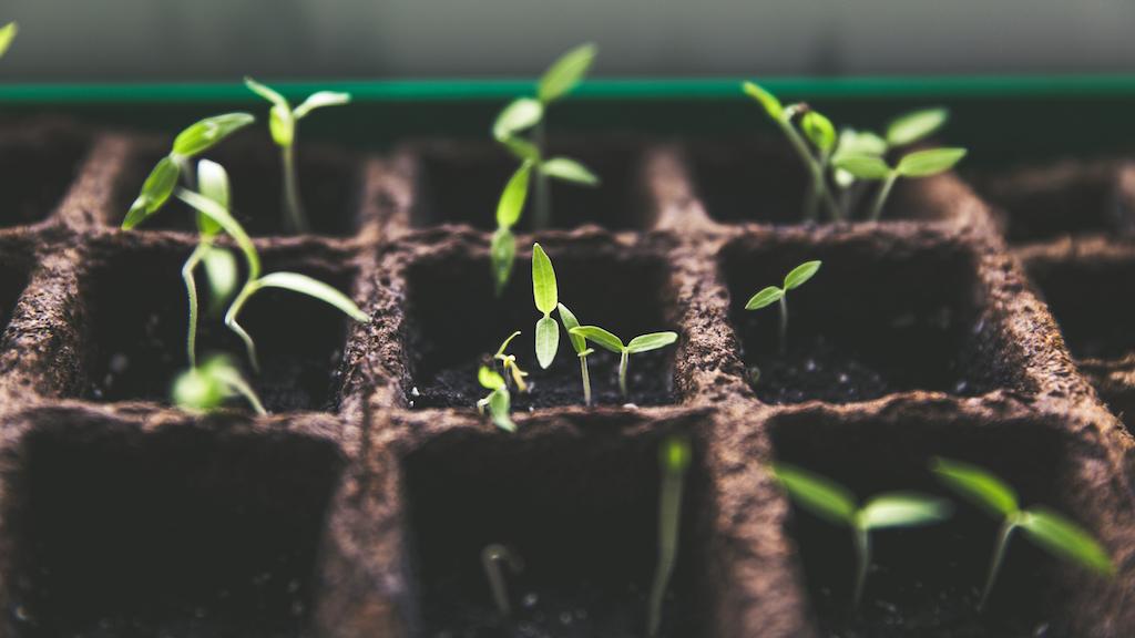 Growing Kingdom Visions